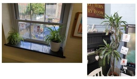 Indoor plants photos
