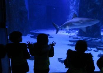EYFS visit the Sea Life London Aquarium