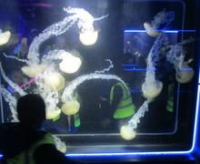 Aquarium blog (1)
