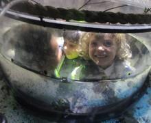 Aquarium blog (2)