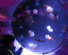 Aquarium blog (3)
