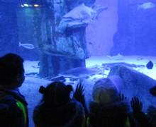 Aquarium blog (5)