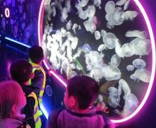 Aquarium blog (6)