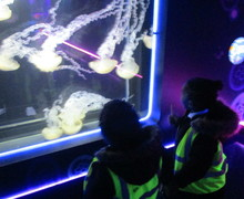 Aquarium blog (7)