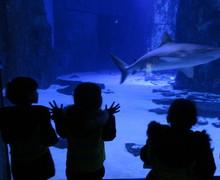 Aquarium blog (8)