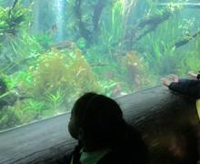 Aquarium blog (9)