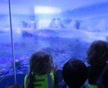Aquarium blog (10)
