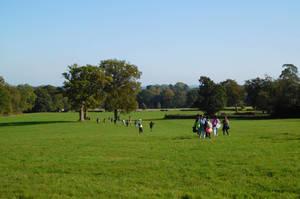 Sayers croft field
